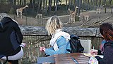 Students on field work at Arnhem Zoo - studying giraffes' behaviour