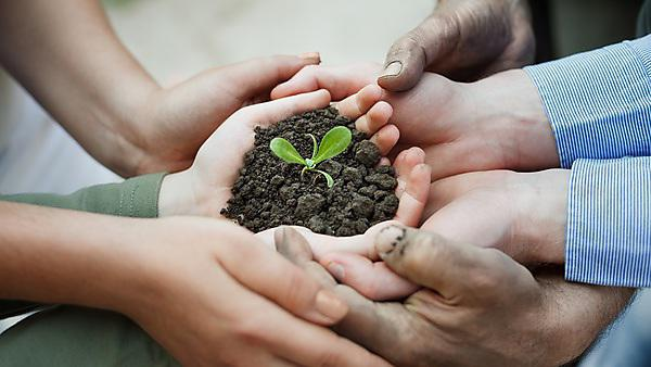 Cupped hands holding a new plant in soil [shutterstock_147729638]