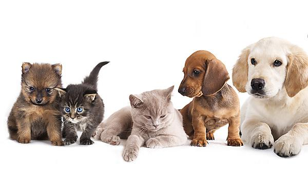 Group of cats and dogs. Courtesy of Shutterstock