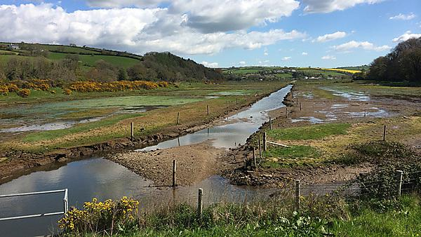 South Efford salt-Marsh, Aveton Gifford, South Hams, Devon. UK