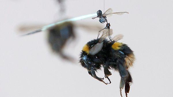 Bee artwork at Hot15