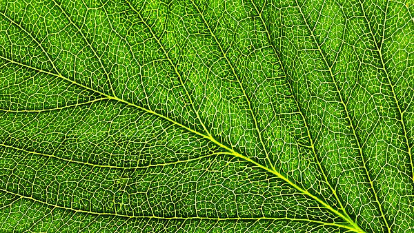 Leaf courtesy of Shutterstock