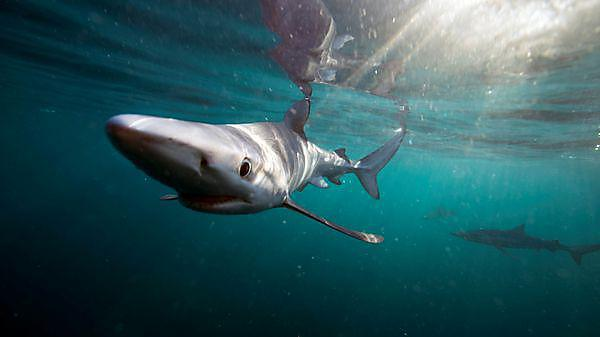 On board with ITV and Britain's sharks