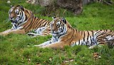 The biggest variety of big cats in the South West.