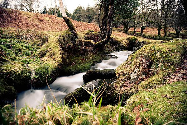River flowing at Burrator, Dartmoor