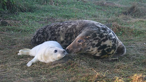 <p>Mother and baby seal</p>