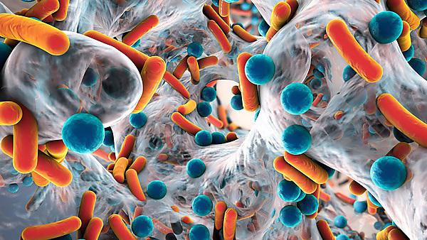 <p>Biofilm of antibiotic resistant bacteria, close up view. Rod-shaped and spherical bacteria. Shutterstock image</p>