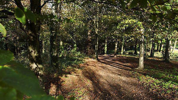 <p>Woodland view</p>