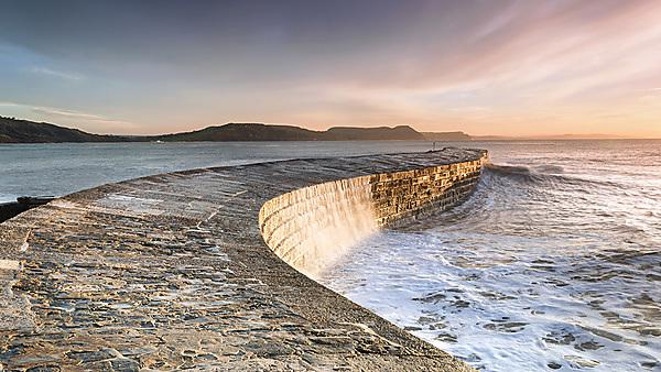 Artificial coastal defences could be used to enhance marine biodiversity
