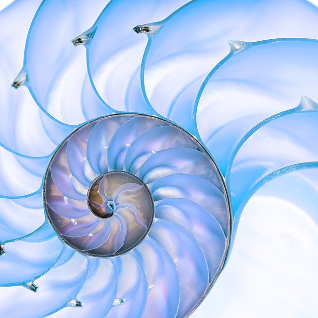 <p>                   </p><p>Mathematics, the queen of the sciences, explores some of the most profound ideas developed by humanity. The nautilus shell above is related to the golden ratio, which appears in many areas of science. Mathematics is also extremely important for many applications in the natural sciences and engineering, for example, weather forecasting and cryptography.</p><p></p>