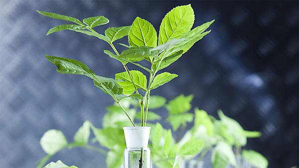 <p>Environmental biotechnology induction - plant. Shutterstock.</p>