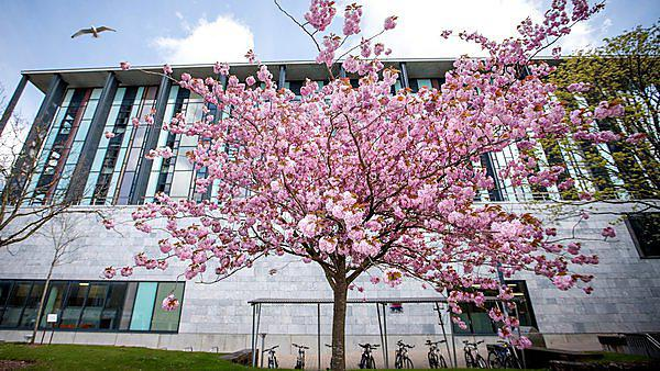 <p>Blossom on a tree outside the Marine Building<br></p>