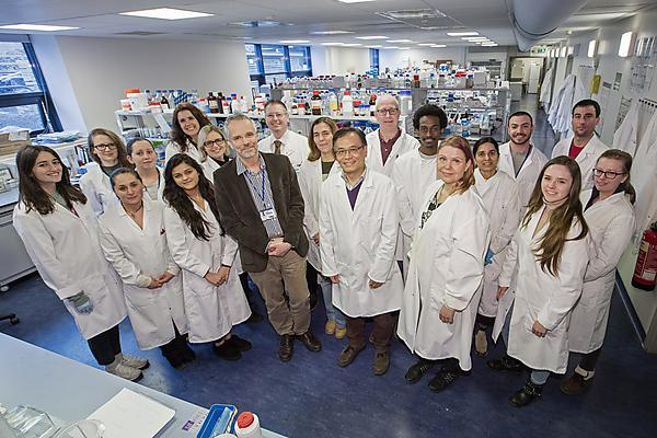 <p>Brain tumour research team in the lab</p>
