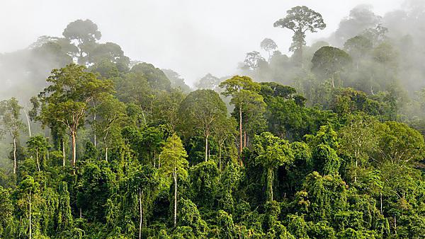 <p>Dense tropical rainforest - Getty images</p>