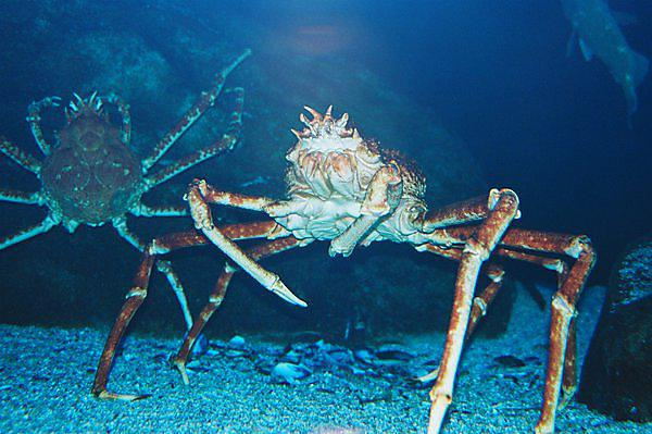 Effects of climate change on crustacean ecophysiology