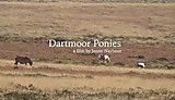 Dartmoor ponies by Jenny Naybour