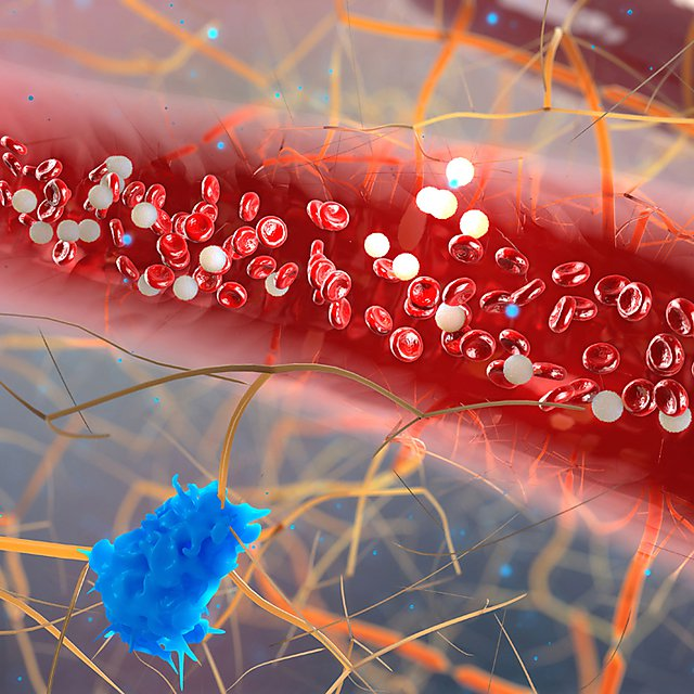 <p>inside the blood vessel, white blood cells inside the blood vessel, High quality 3d render of blood cells, Red and white blood cells in artery.&nbsp;Credit: urfinguss, courtesy of Getty Images<br></p>
