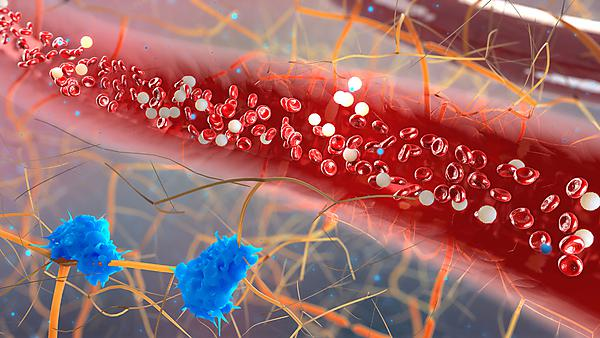 <p>inside the blood vessel, white blood cells inside the blood vessel, High quality 3d render of blood cells, Red and white blood cells in artery. Credit: urfinguss, courtesy of Getty Images<br></p>