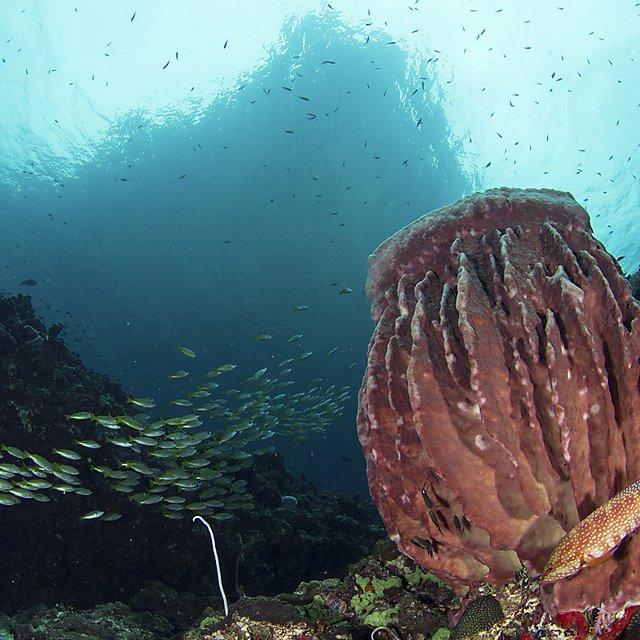 <p>Deep-sea sponges antimicrobials</p>