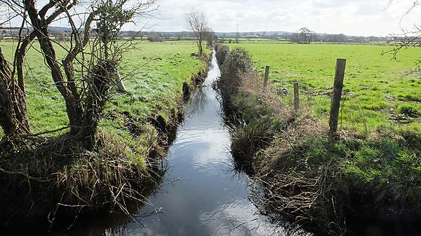 <p>Somerset Levels<br></p>