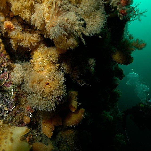 <p>Diving</p>