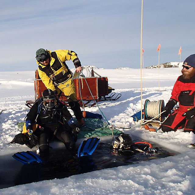 <p>Diving