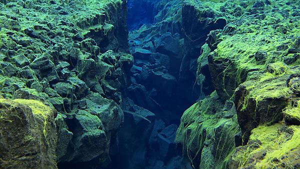 <p>View of Rocky Divide Covered in Green Carpet Algae in Continental Split at Silfra in Shallow Section at Pingvellir National Park in Iceland. <br></p>