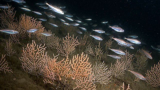 <p>Sea fans off Plymouth<br></p>