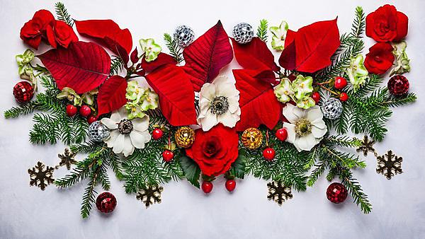 <p>Christmas decoration with poinsettia, holly, ivy, mistletoe and fir branches on light background<br></p>