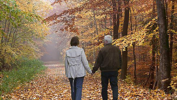 <p>Rear view of senior couple walking in autumn forest<br></p>