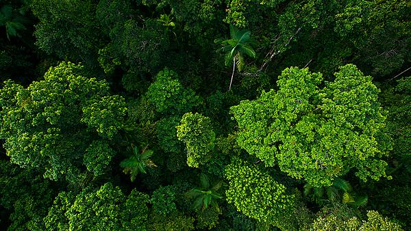 <p>Rain forest from air near Kuranda, Queensland, Australia. Image courtesy of Getty Images.<br></p>