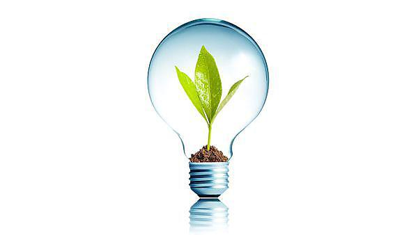 <p>Lightbulb with plant</p>