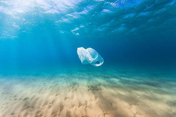 Marine organisms can shred a carrier bag into 1.75 million pieces, study shows