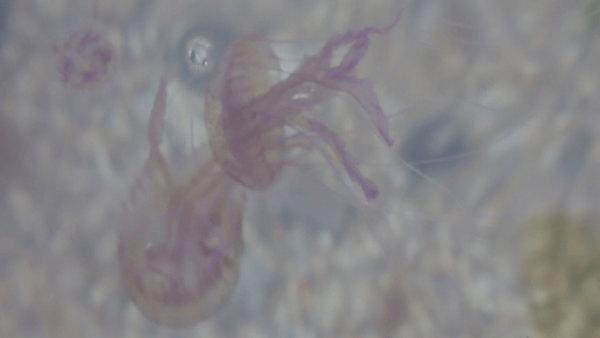 Writing workshop: Jellyfish Thinking, Feeling, Being