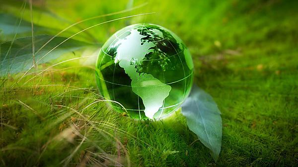 <p>Globe resting on moss in a forest.<br></p>