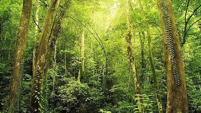 <p>Dense rainforest in Malaysia<br></p>