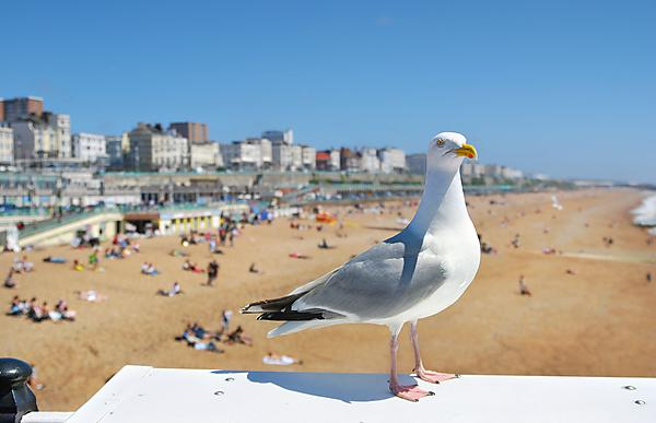 <p>A seagull on Brighton beach (Credit: Abbesses, Getty Images)</p>