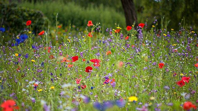 <p>Wildflower meadow stock image</p>