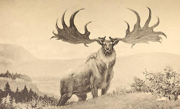 <p>The Great Irish Deer.&nbsp;By Internet Archive Book Images via Wikimedia Commons</p>