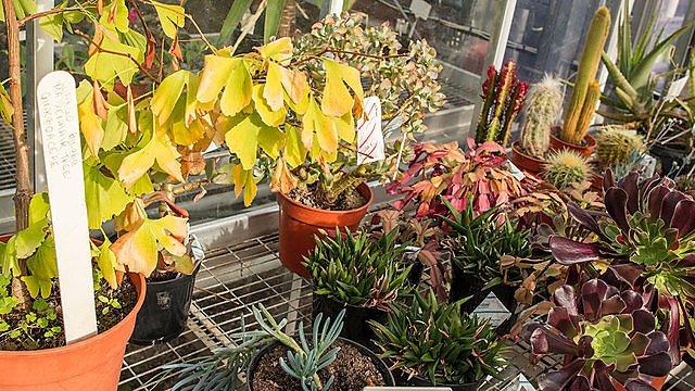 <p>Skardon Garden plants</p>