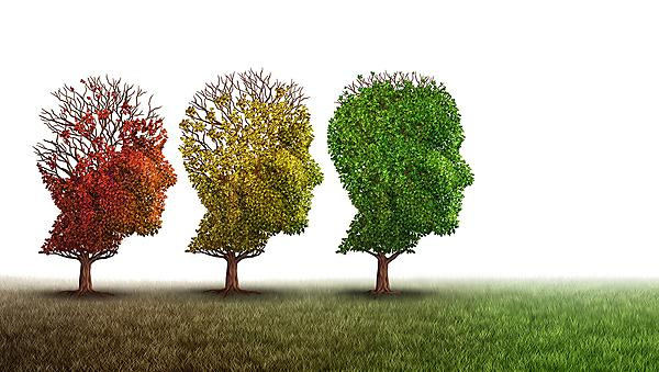<p>Dementia and mental health recovery treatment and Alzheimer brain memory disease therapy concept as old trees recovering as a neurology or psychology and psychiatry cure metaphor with 3D illustration elements on a white background.<br></p>