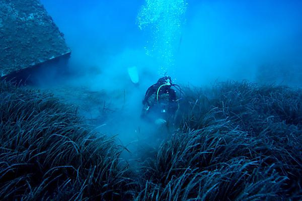 <p>A diver assesses beds of Posidonia oceanica off the coast of Cyprus</p>
