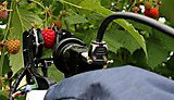 University spinout signs agreement to field test harvesting robots
