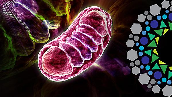 <p>Mitochondrial biology with ITSMED visual mark</p>