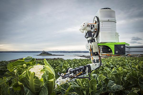 <p>Agri-Tech Cornwall Automated Brassica Harvesting in Cornwall (ABC) project</p>