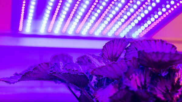 <p>Agri-Tech project facilitating the development and expansion of