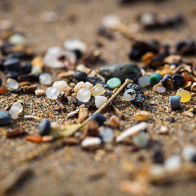 <p>Plastic marine litter<br></p>