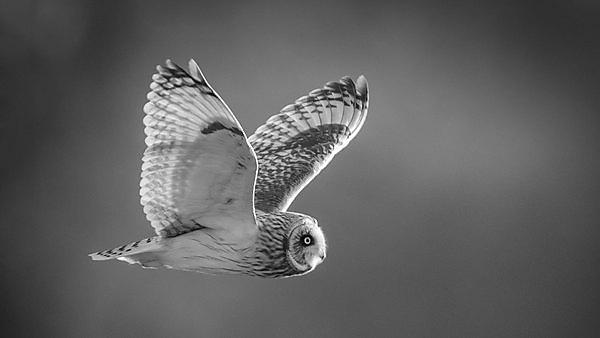 <p>Owl. Getty images 545362212<br></p>