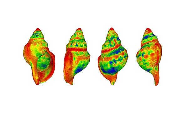 <p>A heat-map demonstrating where differences are most likely to occur in shell shape among gastropods<br>exposed to raised CO2 levels (with red indicating a greater degree of change)<br></p>