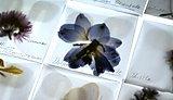 Florilegium (Spring/ Summer) - Amy Shelton